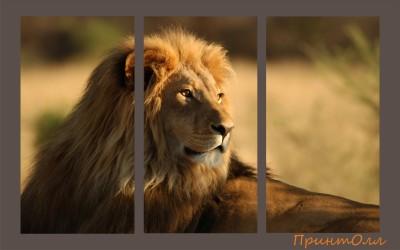 лев 1100 на 700